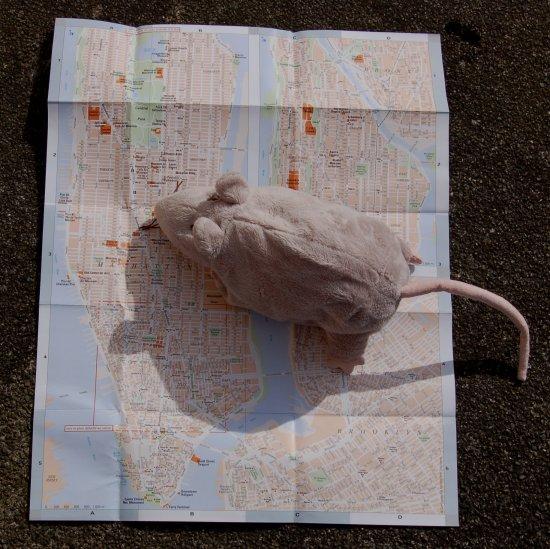 rat_plan.jpg