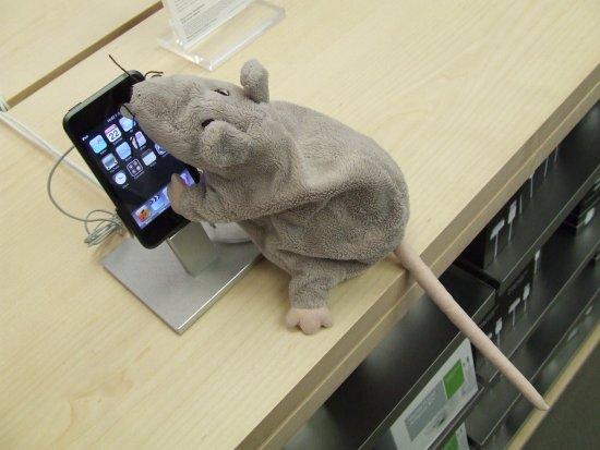 rat clique sur ipod