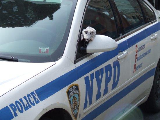 le rat s'evade de la police