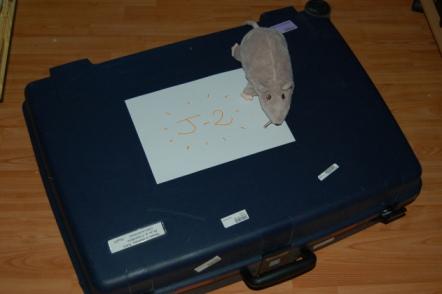 rat_valise11.jpg